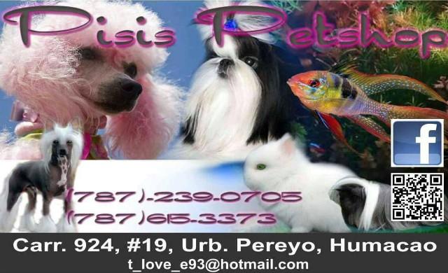 Pisis pet shop